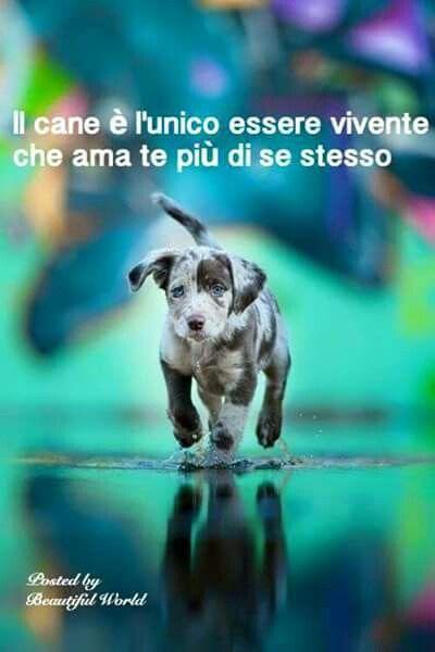 Il cane. ...