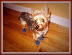 Best Summer Dog Boots Mini Meshies By Barko Booties Images On - Dog shoes for hardwood floors