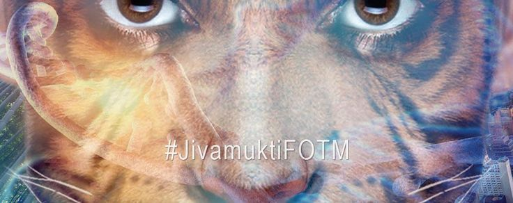What Is a Person? (The World in Which the Kestrel Moves)   Jivamukti Yoga