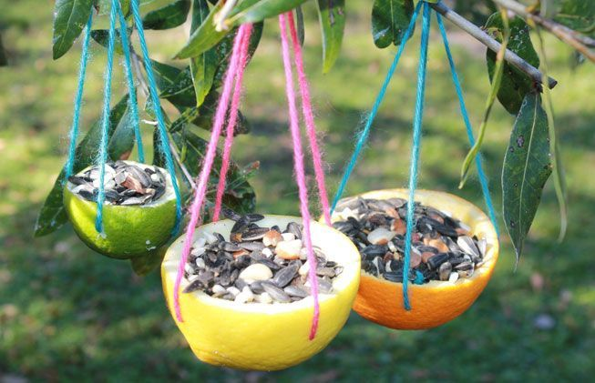Citrus rind bird feeders hanging from branches