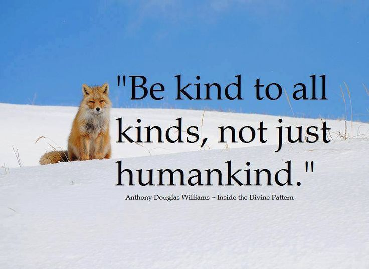 Be Kind To All Kinds Not Just Humankind Be Kind To Animals