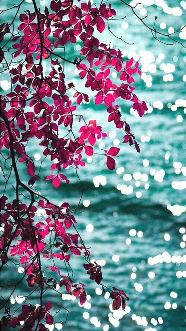 Pink aqua floral leaves bokeh ocean sea view iphone phone wallpaper background lock screen