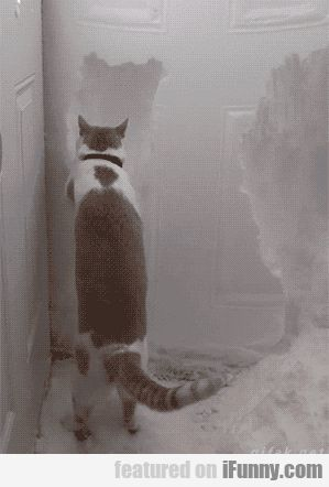 Cat Helps Clear Snow Away From Front Door...now i've seen the cutest cuteness ever.