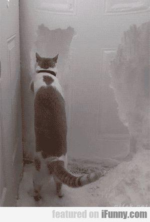 Cat Helps Clear Snow Away From Front Door