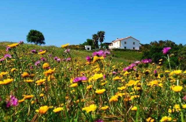 Passe a Sua Páscoa no O Monte do Zambujeiro em pleno coração do Parque Natural do Sudoeste Alentejano | Escapadelas | #Portugal #Alentejo #Odemira #Monte #Turismo #Rural