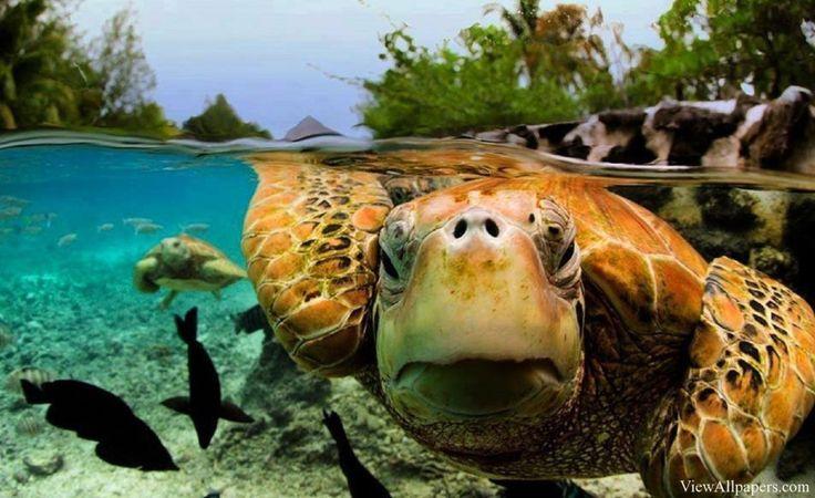 Bora Bora - Astonishing Underwater Photography  Best of Web Shrine