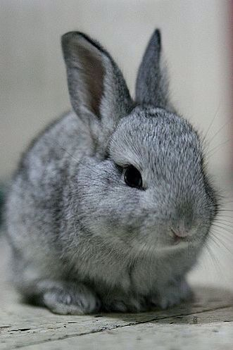 Pretty bunny an color