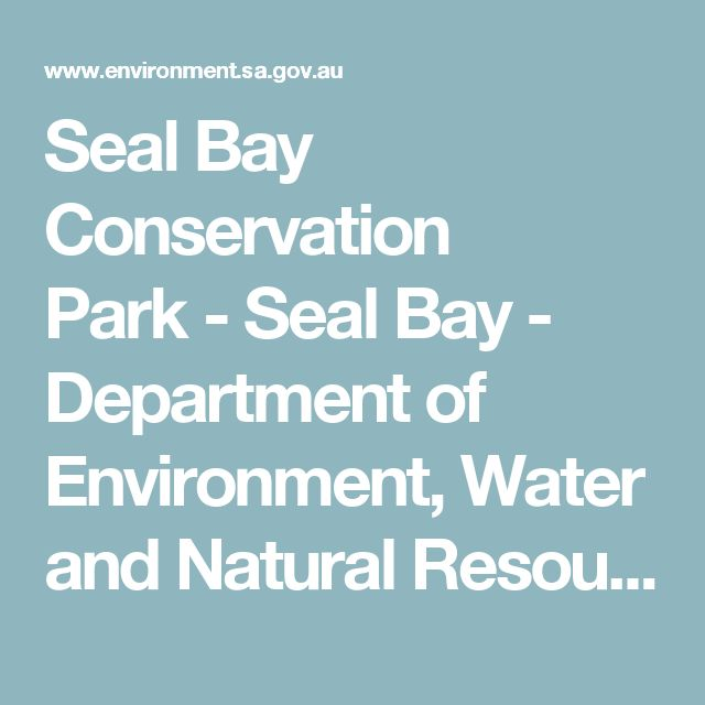 Seal Bay Conservation Park-Seal Bay - Department of Environment, Water and Natural Resources