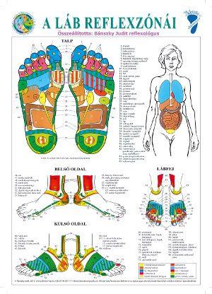 A láb reflexzónái plakát - A3 | Magyar Természetgyógyászok és Életreformerek…