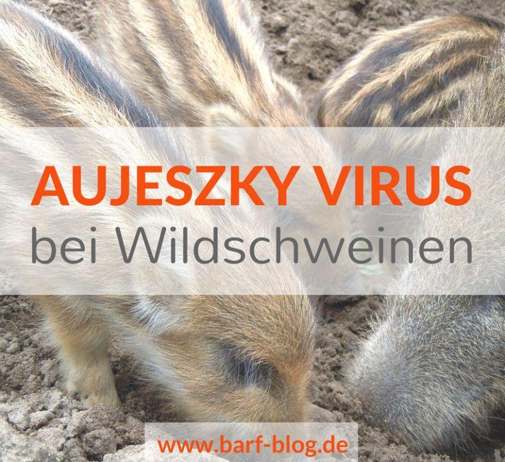 Aujeszky- Virus – Wie gefährlich ist es in der Rohfütterung / beim BARFen?
