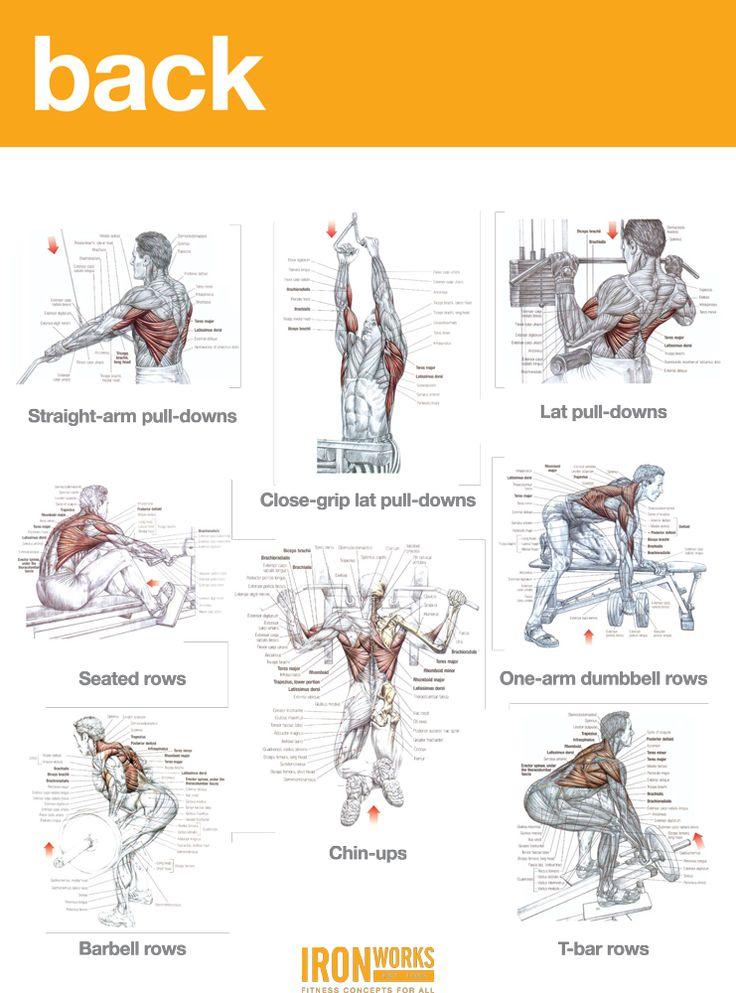 BACK, TRAPS AND BICEPS WORKOUT | Gym | Pinterest | Biceps ...