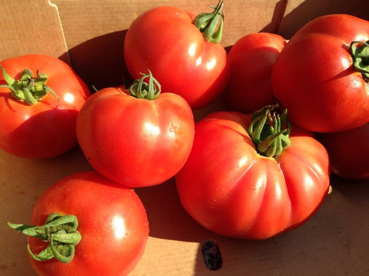 Beefsteak tomatoes from Brook House Farm on the Fylde