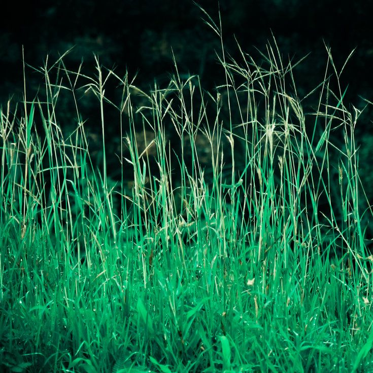 How to Get Rid of Bermuda Grass - Sunset