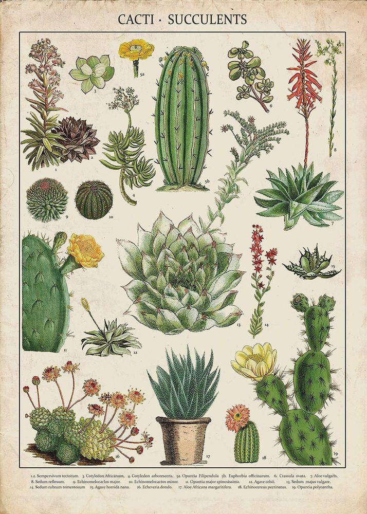Vintage Art Print Poster White flower Botanical A1 A2 A3 A4 A5