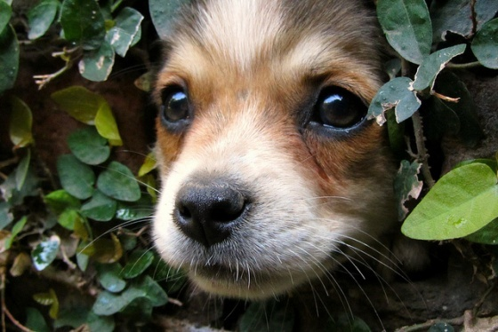 Animal Planets, Puppies Ii, Peekaboo Puppies, Dogs, Little Puppies, Cute Animal Pictures, Daily Squee, Biscuits, Adorable Animal