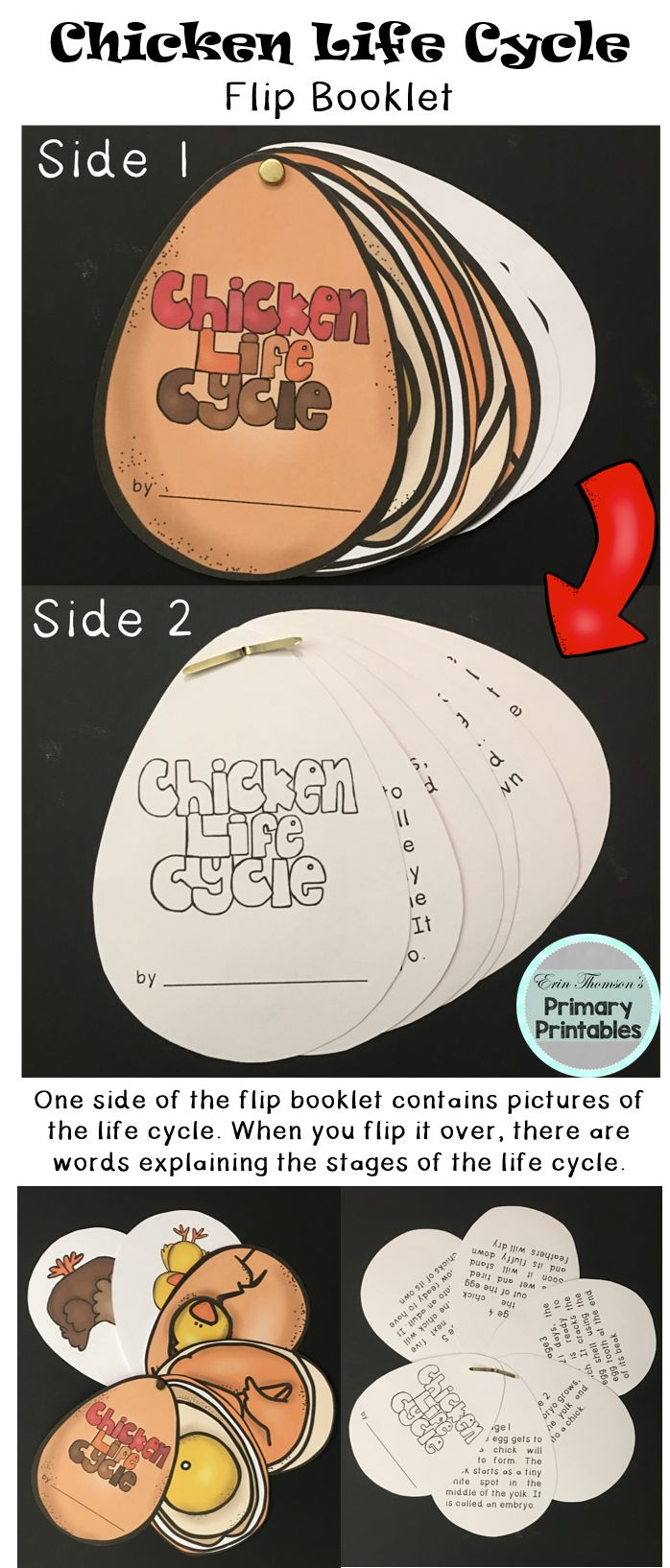 Chicken Life Cycle Flip Booklet ~ egg, growing, hatching, chick, chicken. Includes pictures and stages.