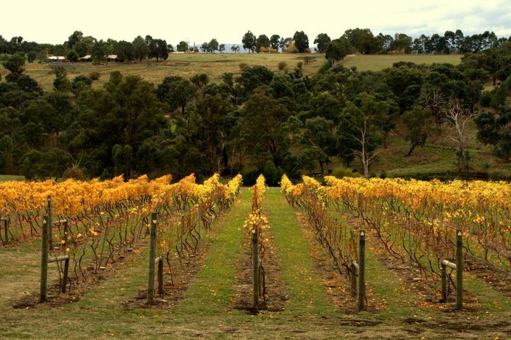 Grape vines by Jenny Campbell, via 500px