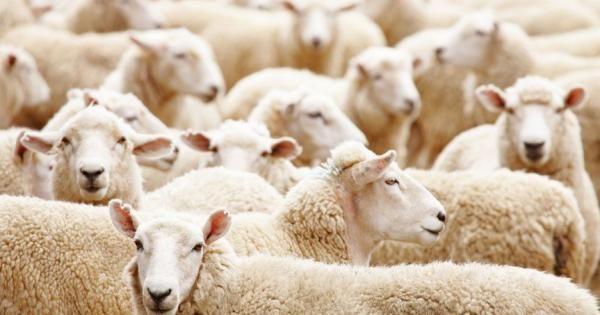 Herd Immunity: Myth or Reality? | GreenMedInfo | Dr. Tatyana O.