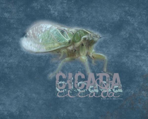 jeni-cicada-wallpaper by starsista, via Flickr