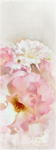 Gallery 2012 - Judy at TOC - Picasa Web Albums