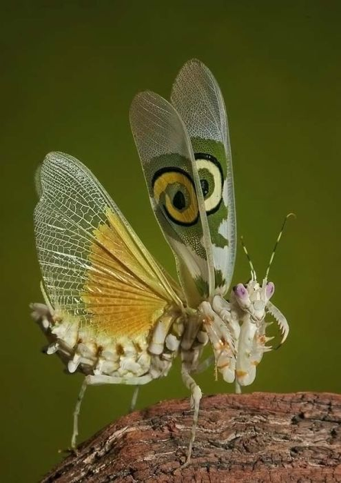 Ms de 25 ideas increbles sobre Insectos raros en