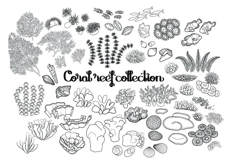 Korallenriff malvorlagen in coloring fa 1 4 r malvorlagen