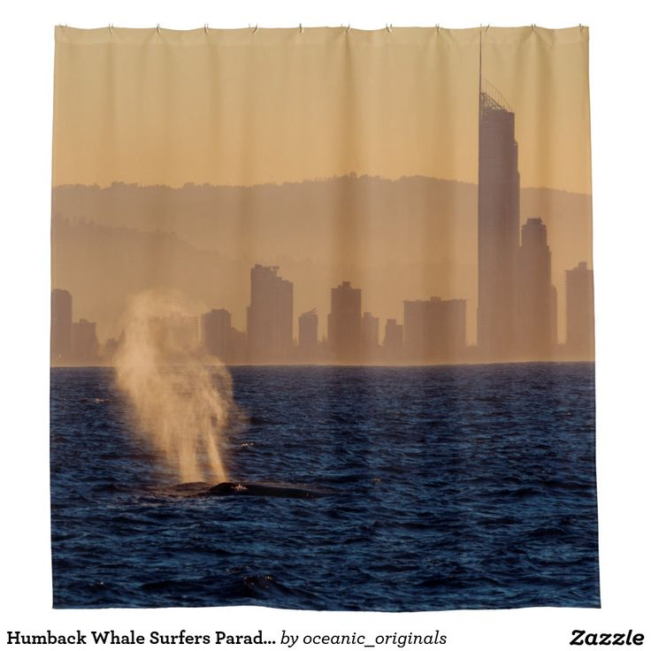 This beautiful shower curtain features a pair of humpback whales taking a breather on the surface in the golden afternoon sun off Surfers Paradise, QLD Australia.