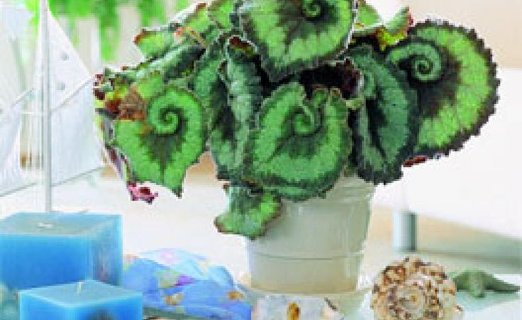 26 besten pflanzen bilder auf pinterest garten g rtnern for Zimmerpflanzen trend