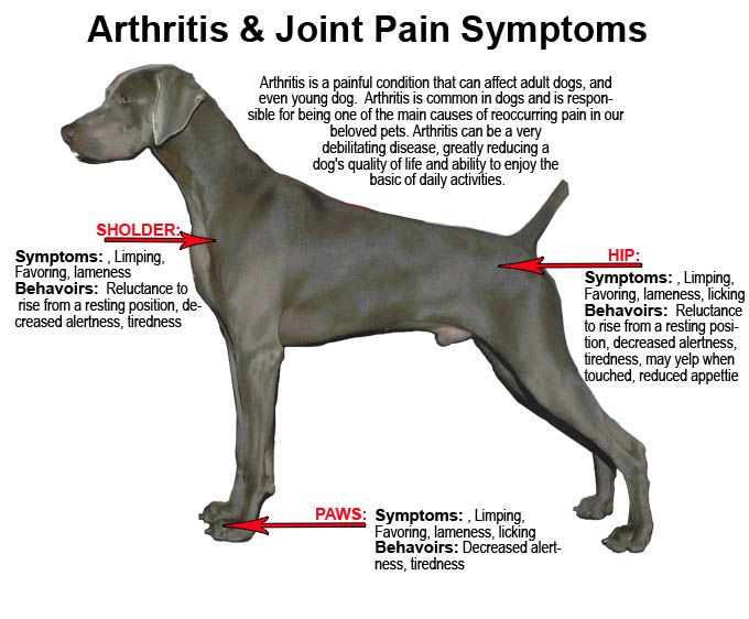 FlexiDog #DogJointSupplements from Simply Pets Online help maintain healthy joints and make your dog active.