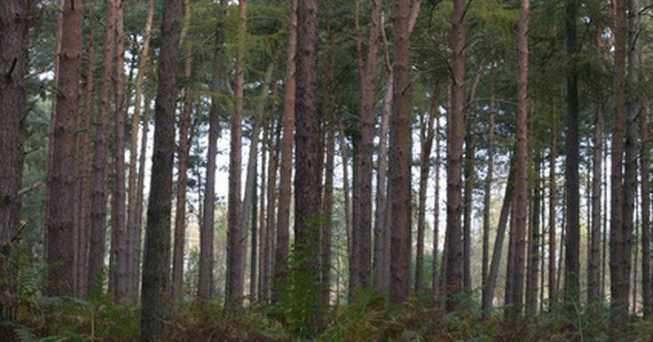 Las mejores especies de árboles para bloquear el ruido de la carretera. El ruido de la carretera no tiene por qué alterar el oasis que has creado en tu patio trasero. Los árboles hacen las veces de una hermosa y eficaz barrera de sonido que realmente puede bloquear hasta 5 decibeles, y aún más cuando se tienen árboles maduros plantados en filas, explica la U.S. Environmental Protection Agency (Agencia de Protección ...