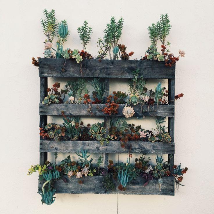 Succulent Pallet