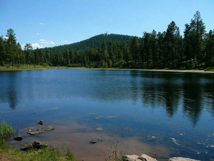 1000 images about pinetop az on pinterest lakes apache for Apache lake fishing