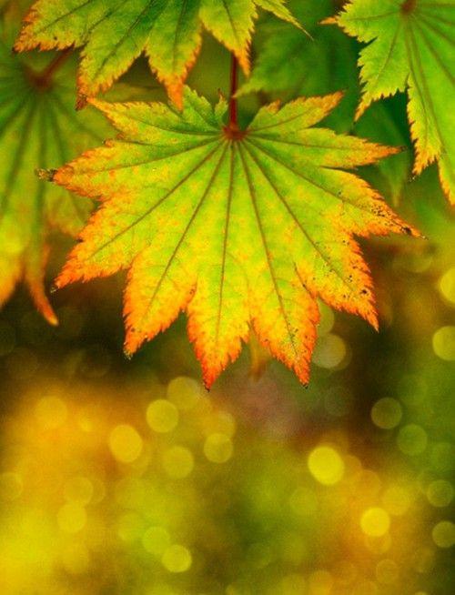 .: Autumn Scene, Fall Leaves, Fall Colors, Autumn Leaves, Autumn Fall, Green Leaves, Autumn Art, Green And Orange, Maple Leaves
