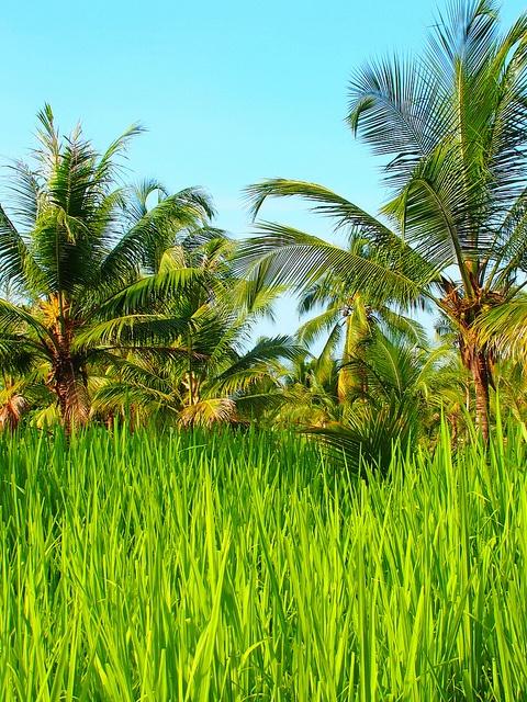 #colombiaenmadrid Si hay algún lugar donde el color verde esmeralda existe ese lugar es Colombia P6012841 by Vagamundos.net/Carlos Olmo, via Flickr