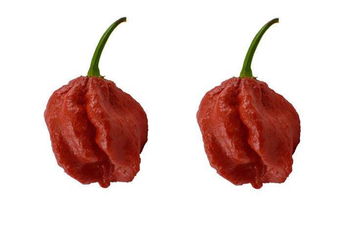 8 BARRACKPORE This evil-looking pepper tops out at about 1,300,000 Scoville units.