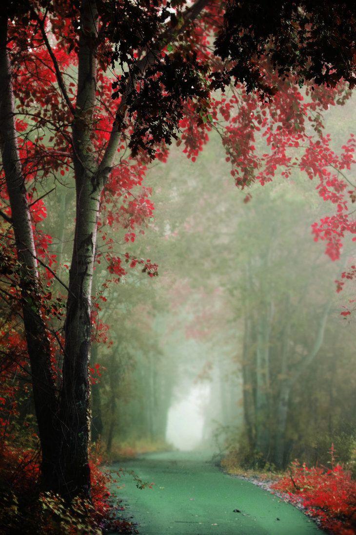 Forest Path Source Facebook Com Nature Photography Forest Landscape Photo