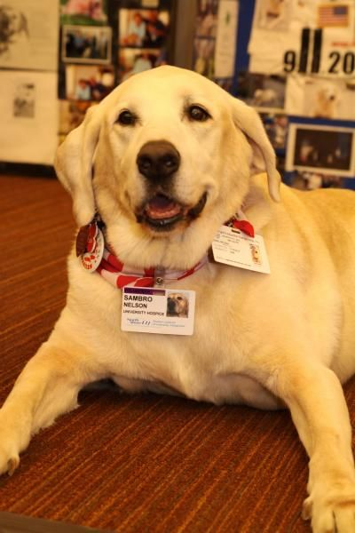 STATEN ISLAND, NY – Staten Island University Hospital (SIUH) recently said goodbye to the retiring hospice therapy dog who spent more than a dozen years bringing comfort and joy to patients and families trying to work through some of life's most difficult situations.