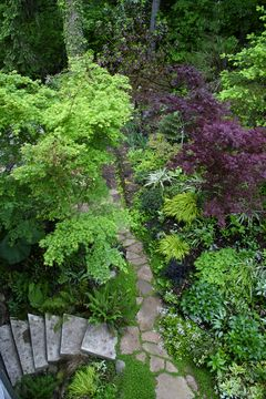 shade garden with pathway