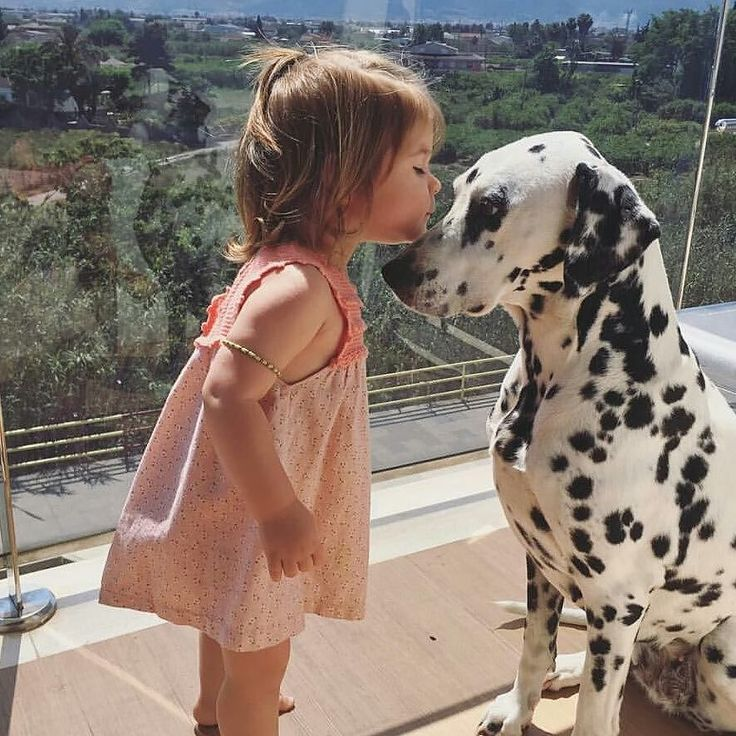 Awww isn't this just precious. Credit to @ana_nois by dalmatians_of_instagram #lacyandpaws