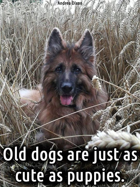 So true....Old dogs are just as cute as puppies! Share if you agree!