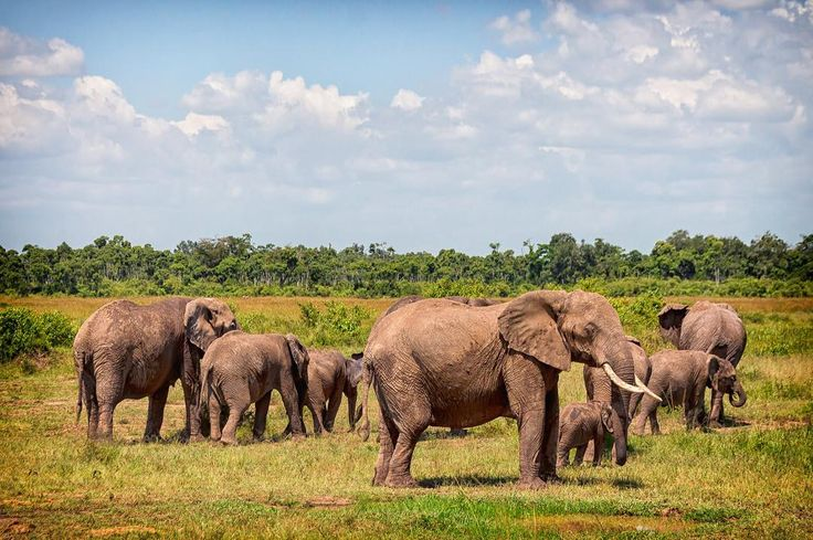 We encountered this lovely elephant herd while on a game drive in South Luangwa National Park in #Zambia.