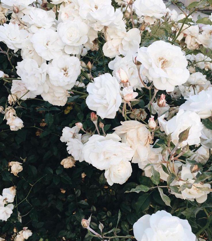 Spring.. So close! 7 weeks to go via: @utterlyengaged #blooms #spring #byronbay