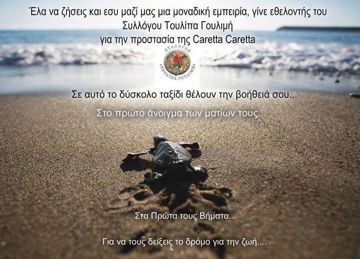 """Η """"Τουλίπα Γουλιμή"""" ζητεί εθελοντές για την προστασία της καρέττα καρέττα"""