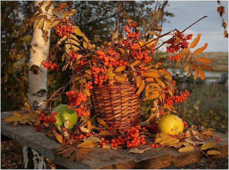 Открытки природа осень осенний натюрморт, сила смешные картинки