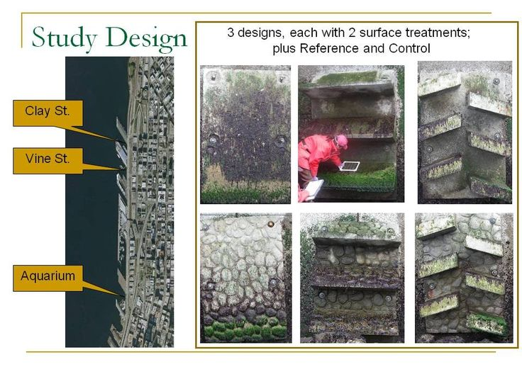 Design of Test Panels and Study - Seattle Seawall Habitat Enhancement Project