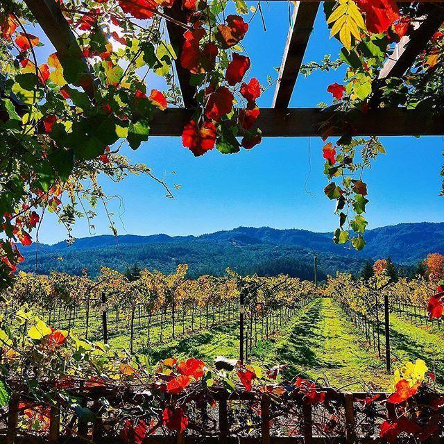 🌎Долина Напа | Калифорния | США.🇺🇸  📝Главный винодельческий регион США и одно из самых известных в мире мест выращивания идеального винограда,🍇 живописная и плодородная долина Напа раскинулась на просторах Северной Калифорнии. Всего здесь 14 тысяч гектаров виноградников, несколько десятков крупных и четыре сотни мелких винных хозяйств. Ароматные и полнотелые вина🍷 Калифорнии пользуются популярностью не только в Америке, но и за границей.  Воочию увидеть, как выращивают виноград и…