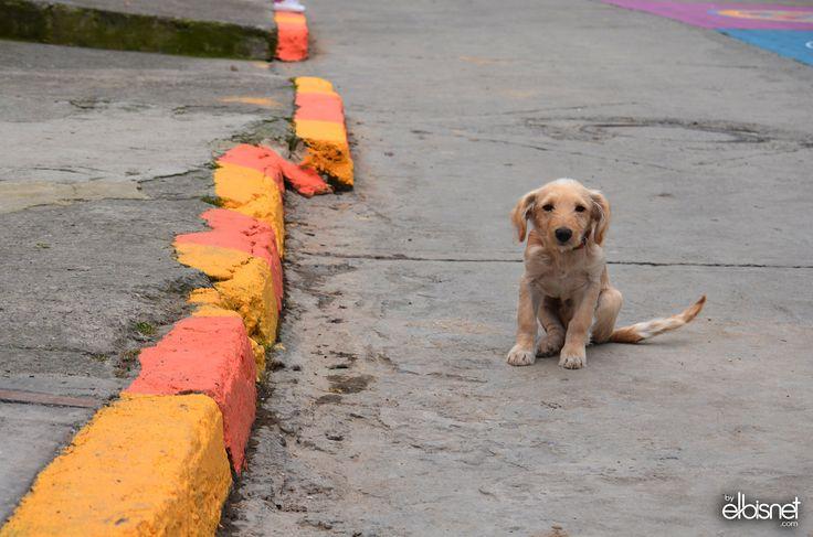 BuenaVista -  Mascotas - De recorrido por Buenavista en el macro mural Sol Lunar, una excelente experiencia conociendo la nueva cara de Bogotá