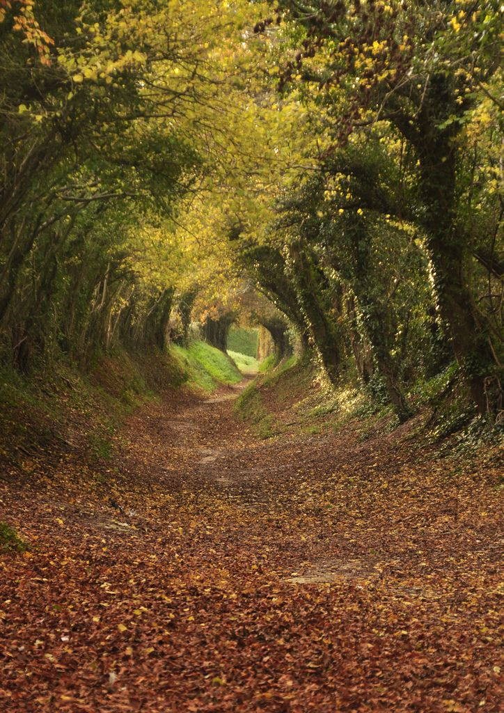 Footpath to Halnaker Mill, West Sussex. by Brian  #AutumnLeaves