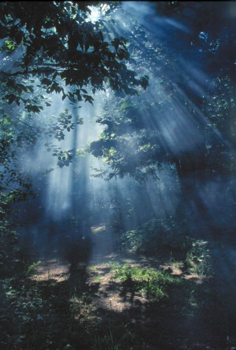 StunningLights, Sun Ray, Wood, Nature, Quote, Magic Places, Dark Forests, Trees, Blue Moon