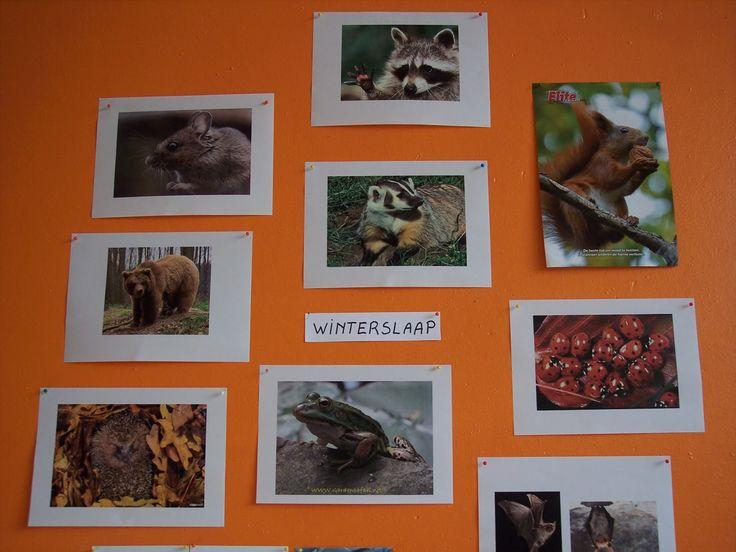 thema dieren in winterslaap kleuters - Google zoeken